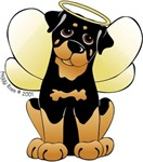 angel rottie