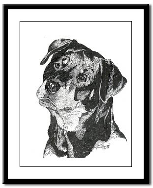 rottweiler art print framed black and white study of a rottweiler price depends on product framed art print as pictured costs 4199