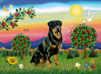 Rottweiler in Bright Country