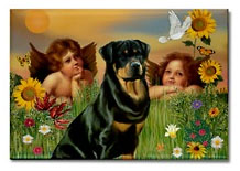 Rottweiler and angels